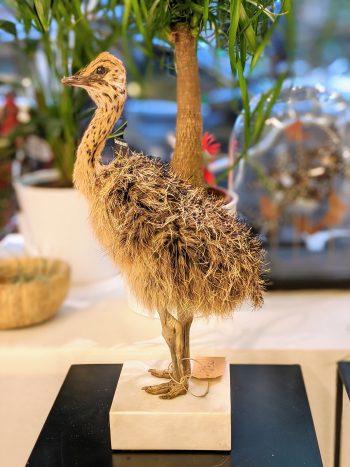 Taxidermie struisvogelkuiken