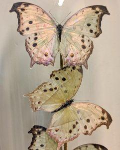 Vlinders bij INScT