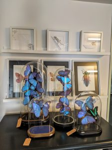 Mix blauwe vlinder
