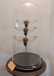 stolp cicaden XL