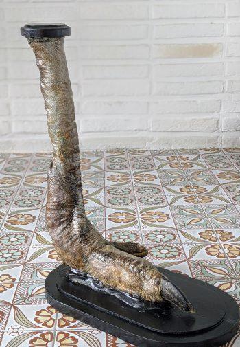 struisvogelpoot taxidermie