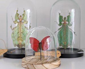Stolpje met bloedrode vlinder