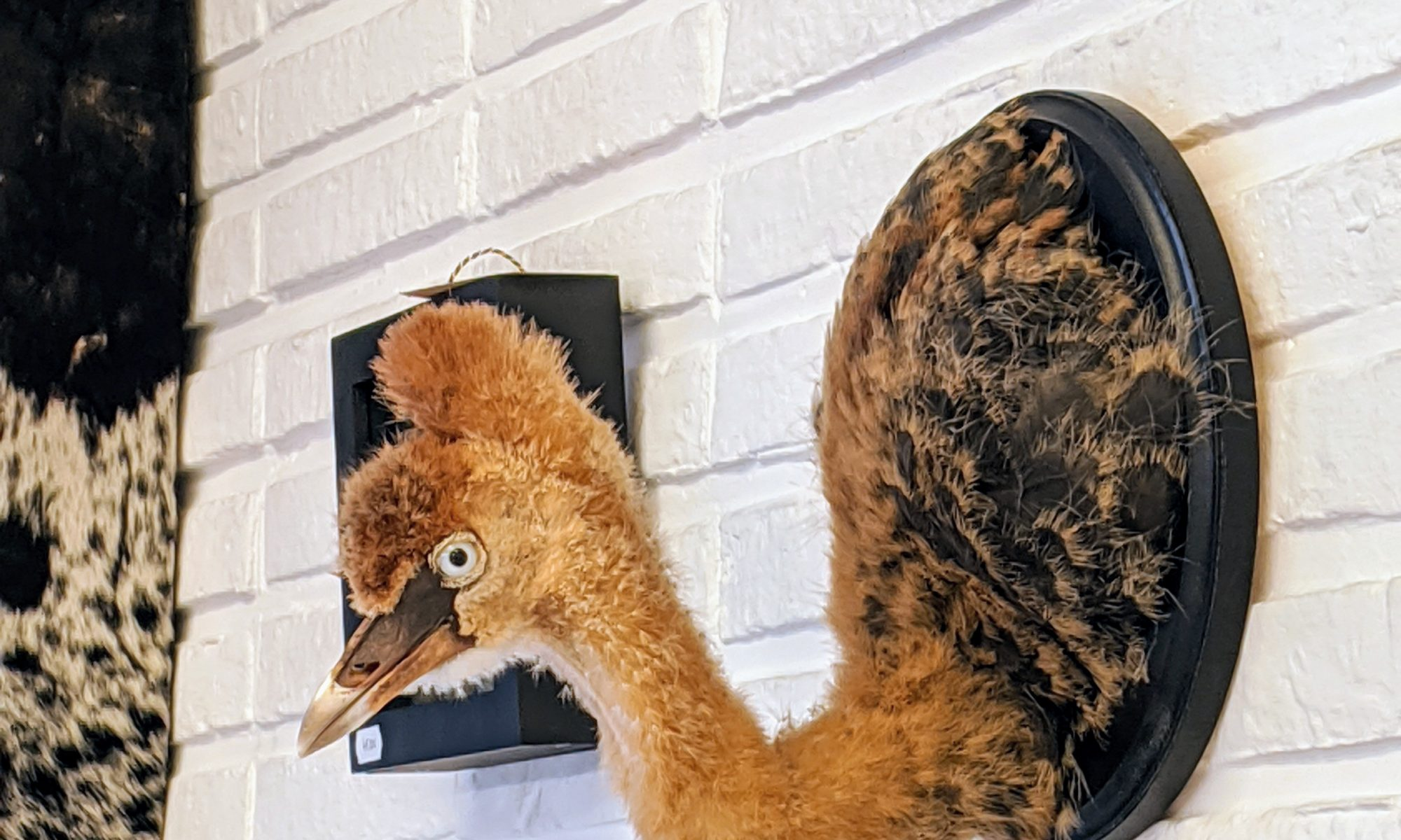 Jonge kroonkraanvogel