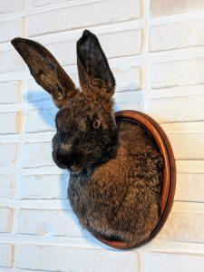 konijn, trofee