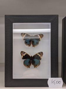 vlinders in kader
