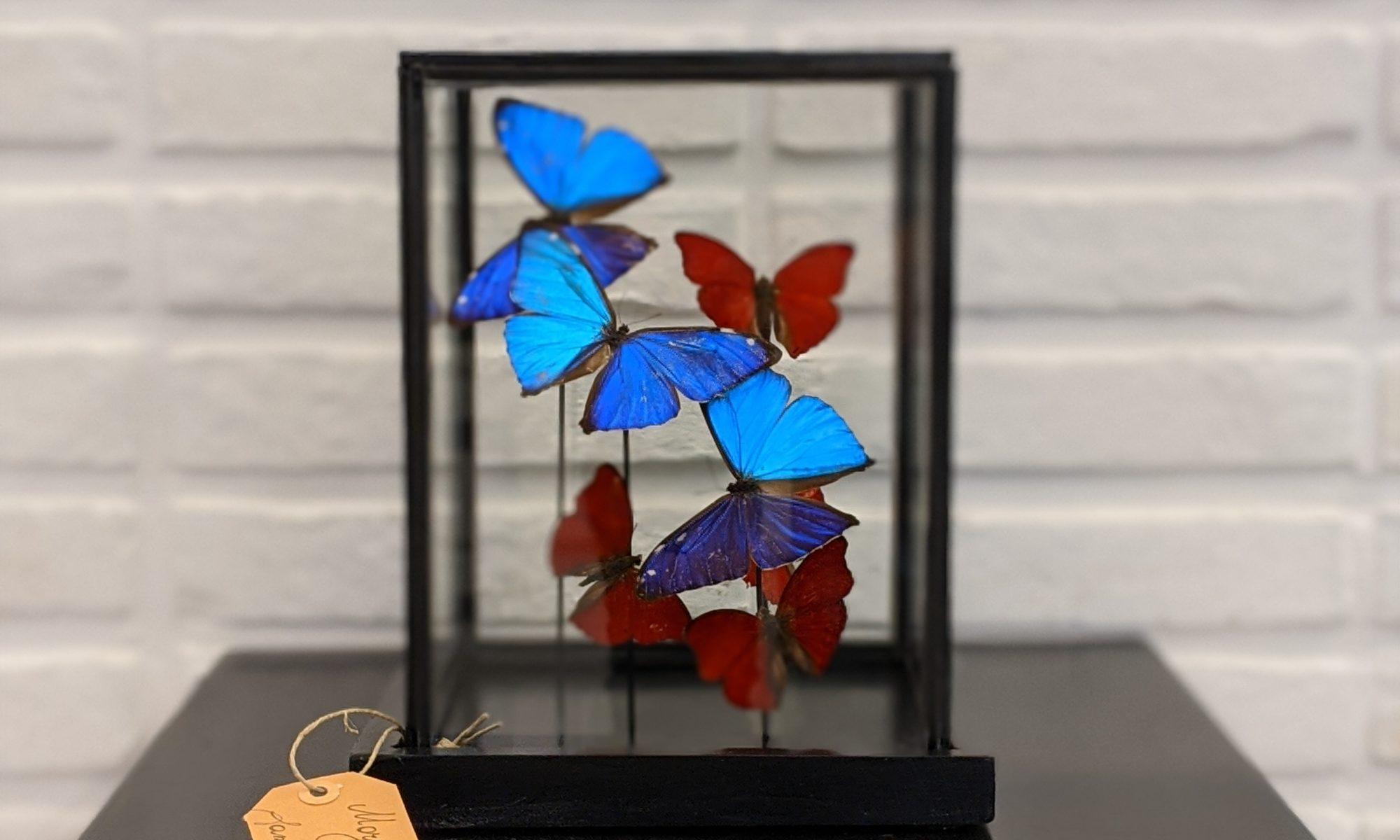 stolp vlinders bij INScT