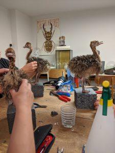 workshop struisvogelkuiken