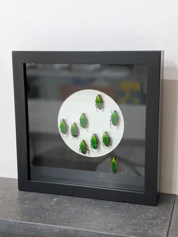Bloemkevers in kader