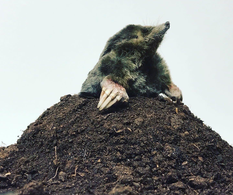 Digging it