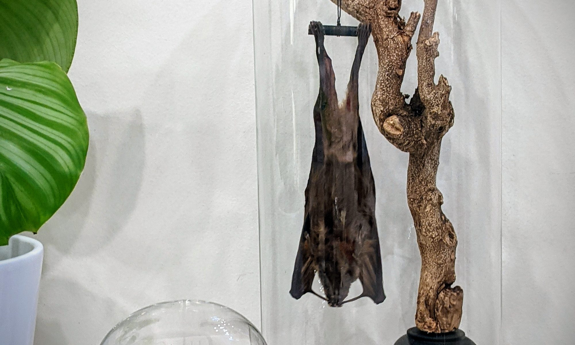 hangende vleerhond