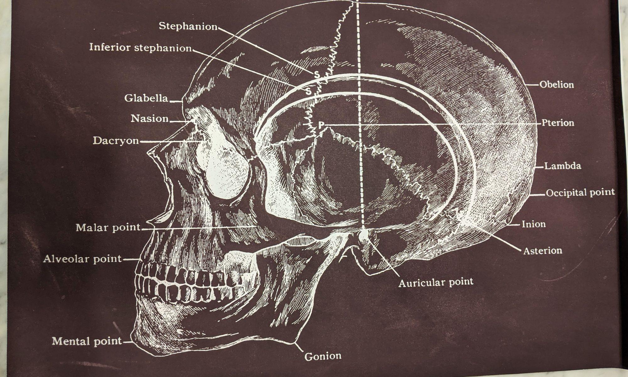 poster schedel