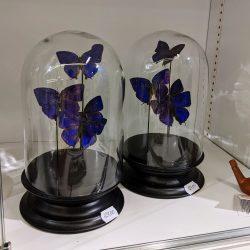 paarse vlinder