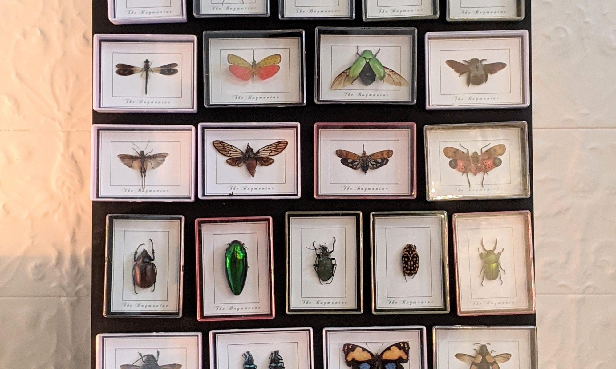 magneten insecten