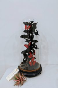 antieke stolp Papilionidae en Nymphalidae