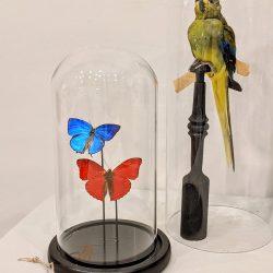 rode en blauwe vlinder