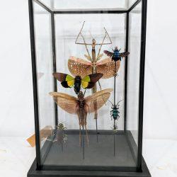 mix insecten