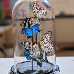vlinderstolp koele kleuren