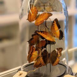 moderne stolp bruine vlinders
