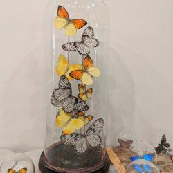 mix vlinders